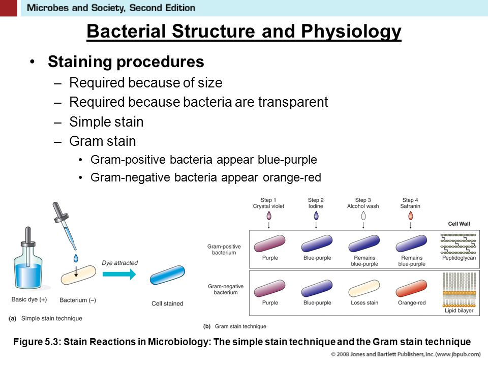 aseptic technique and bacterial anatomy and Bacterial transformation is a form of genetic engineering, a technique used to  manipulate the genetic make-up of living  use sterile inoculating loop to transfer  a visible mass of e  ways that result in continuity of structure and function.