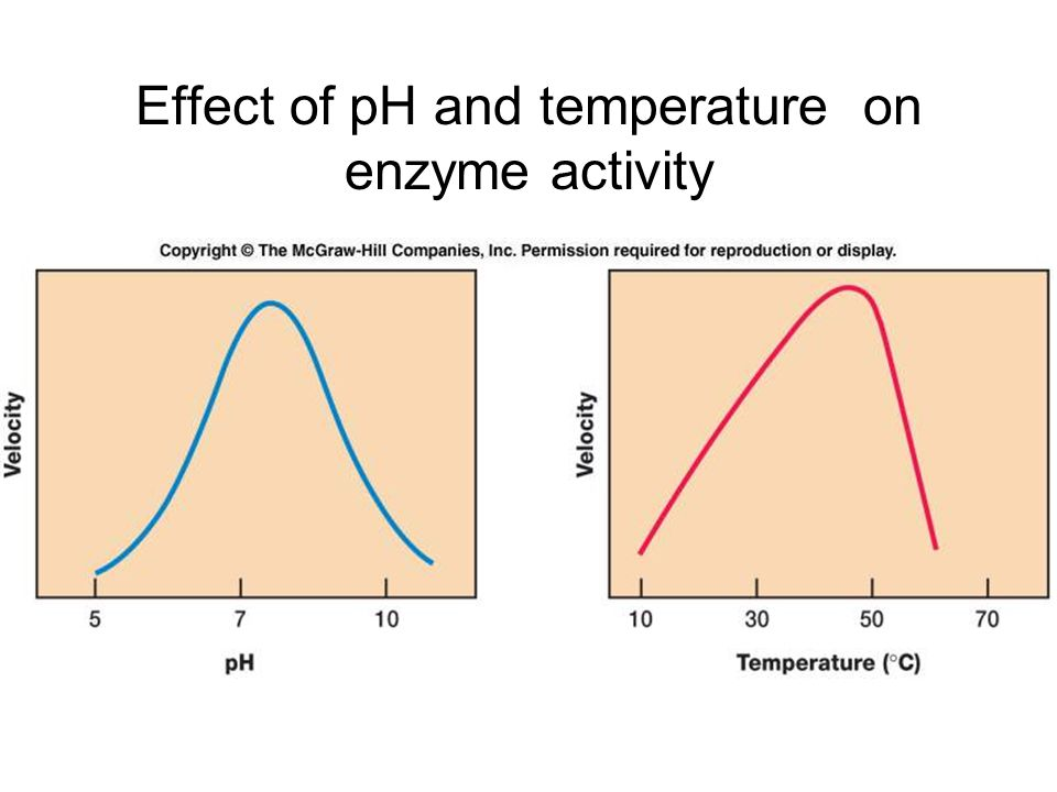 ph consequence at enzyme activity
