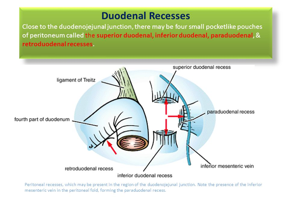 Clinical Anatomy of Peritoneum - ppt video online download
