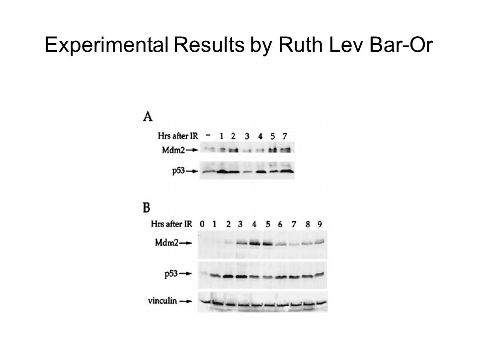 Experimental Results by Ruth Lev Bar-Or