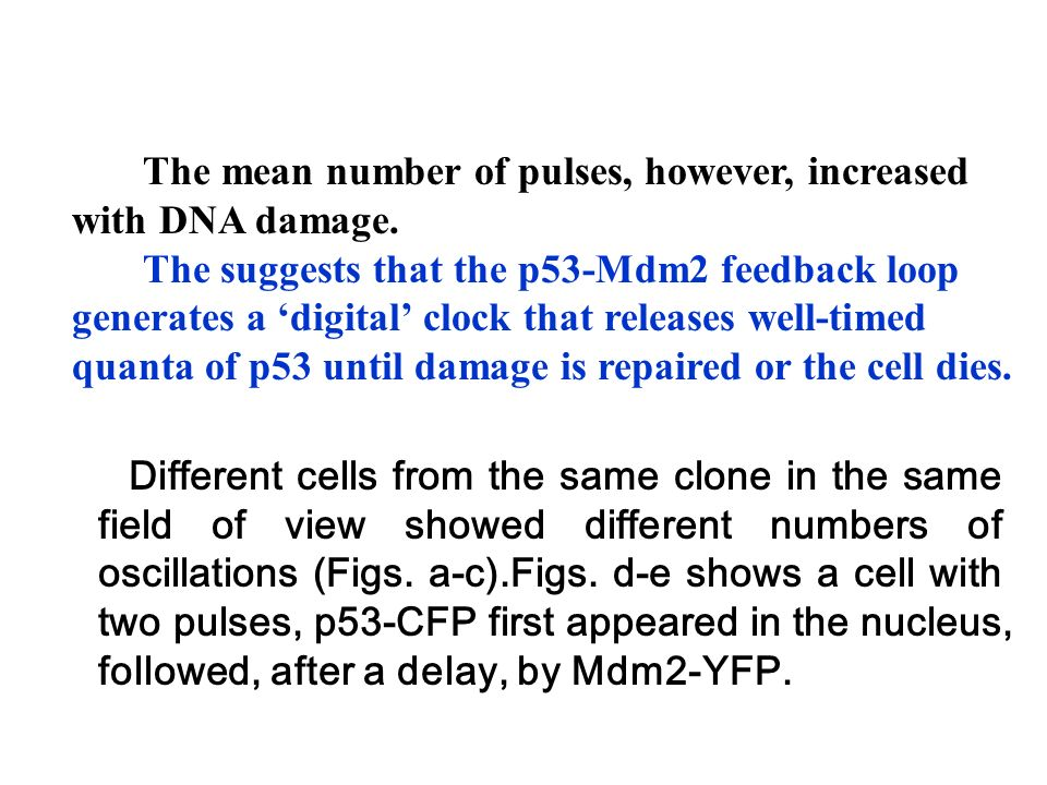 The mean number of pulses, however, increased with DNA damage.