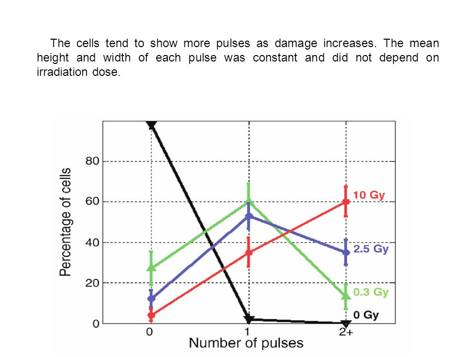 The cells tend to show more pulses as damage increases