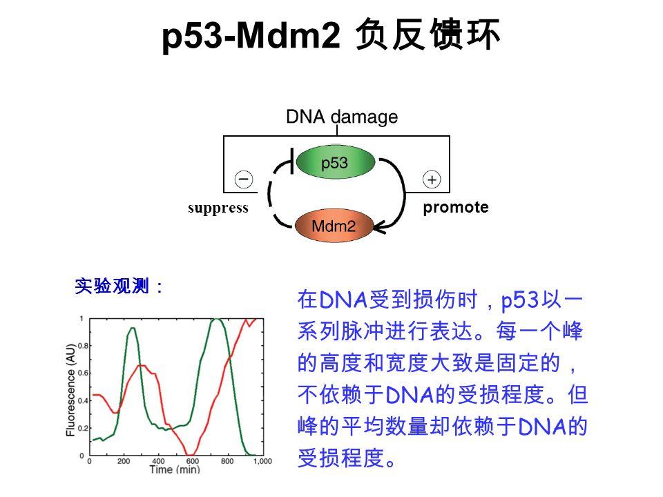 p53-Mdm2 负反馈环 suppress. promote.