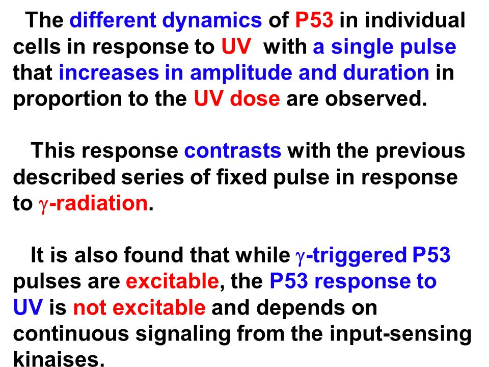 The different dynamics of P53 in individual cells in response to UV with a single pulse that increases in amplitude and duration in proportion to the UV dose are observed.