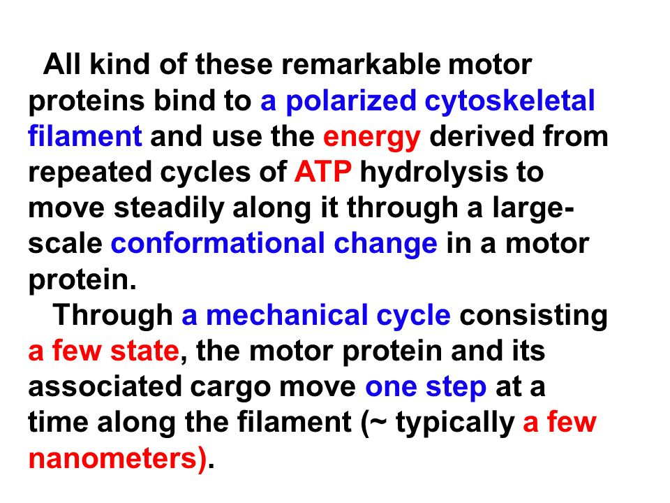 All kind of these remarkable motor proteins bind to a polarized cytoskeletal filament and use the energy derived from repeated cycles of ATP hydrolysis to move steadily along it through a large-scale conformational change in a motor protein.