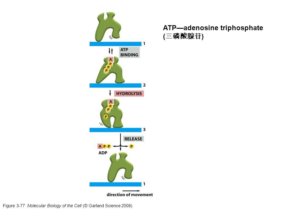 ATP—adenosine triphosphate (三磷酸腺苷)