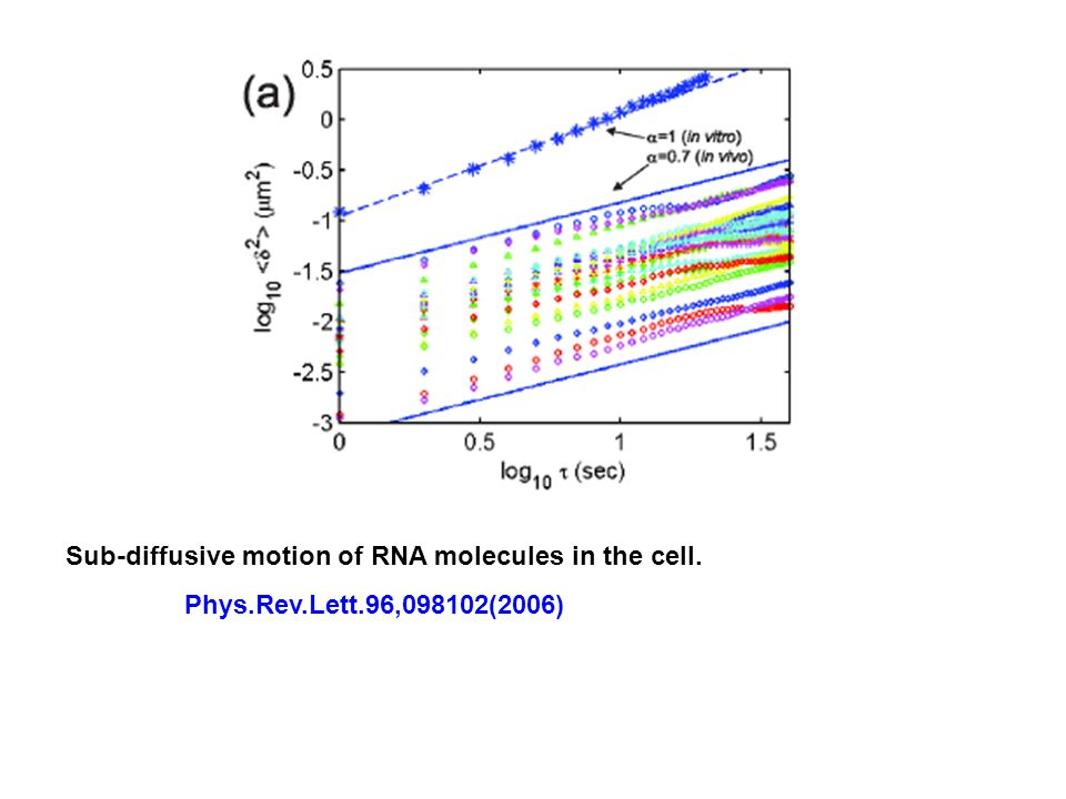 Sub-diffusive motion of RNA molecules in the cell.