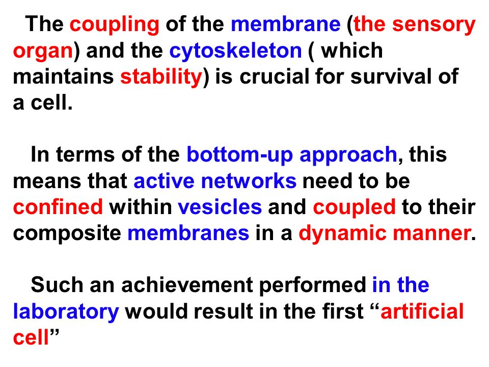 The coupling of the membrane (the sensory organ) and the cytoskeleton ( which maintains stability) is crucial for survival of a cell.
