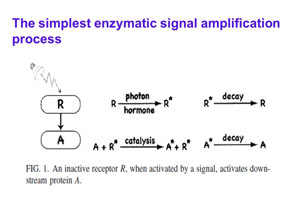 The simplest enzymatic signal amplification process