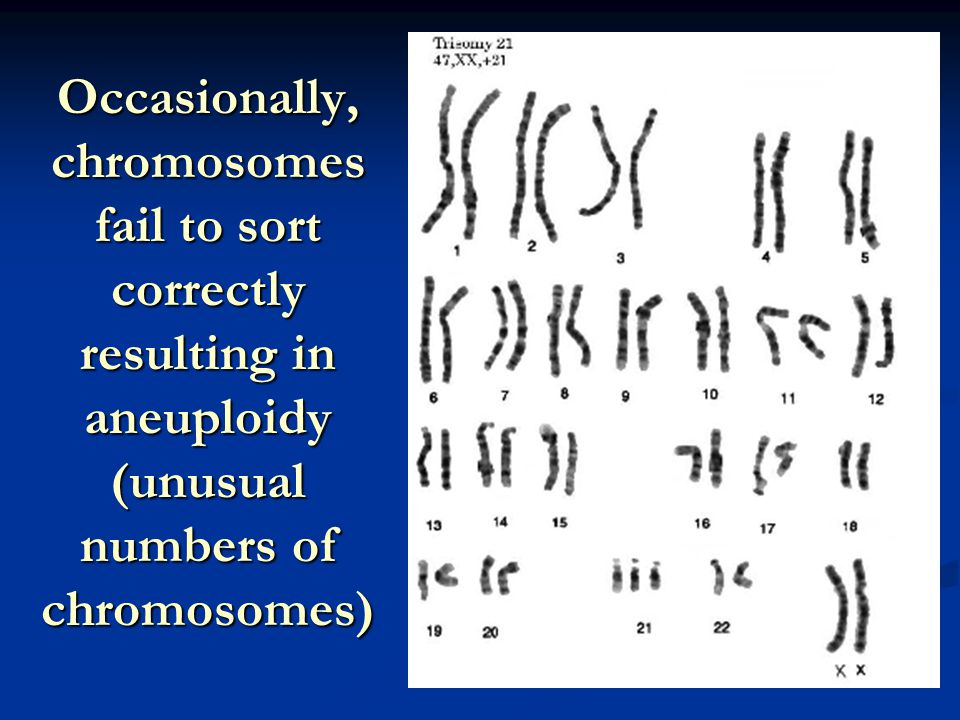 Occasionally, chromosomes fail to sort correctly resulting in aneuploidy (unusual numbers of chromosomes)