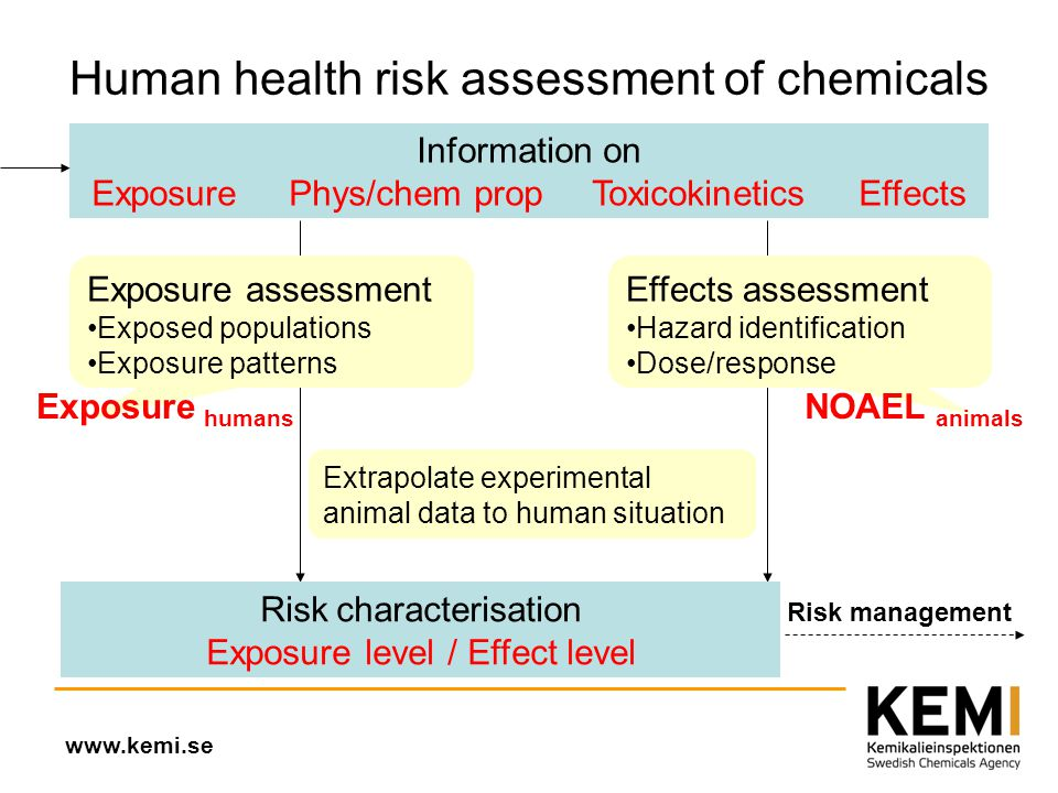Nanomaterial  Human Health Risk Assessment   Ppt Video Online