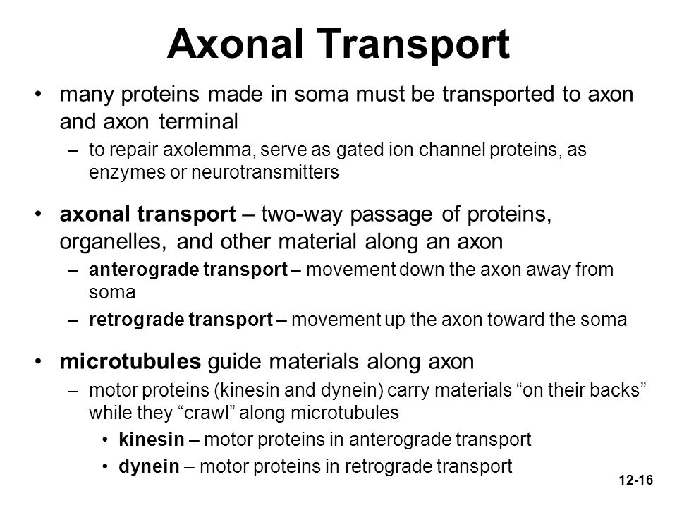 Axonal Transport many proteins made in soma must be transported to axon and axon terminal.