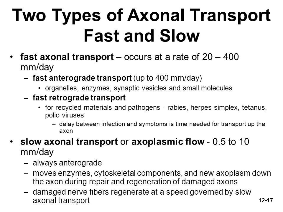 Two Types of Axonal Transport Fast and Slow