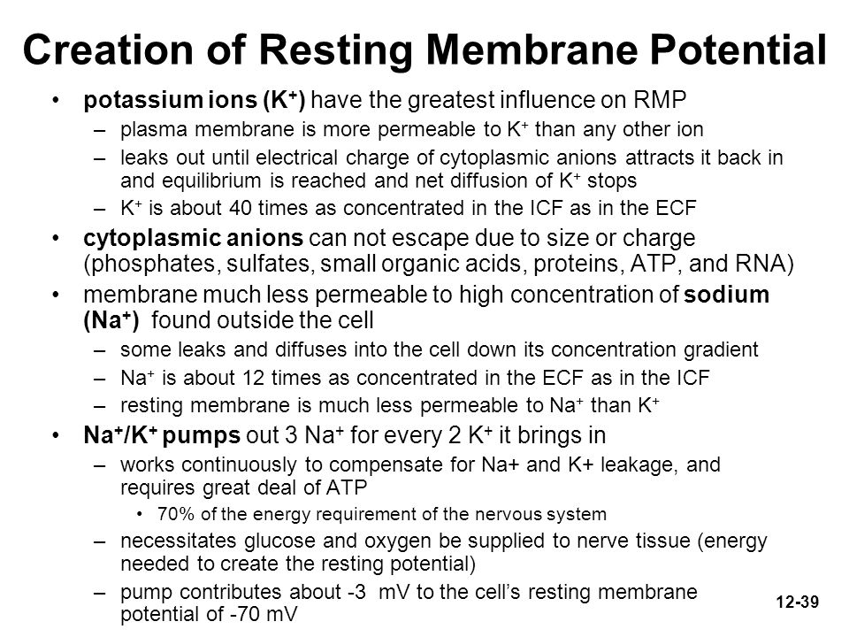 Creation of Resting Membrane Potential
