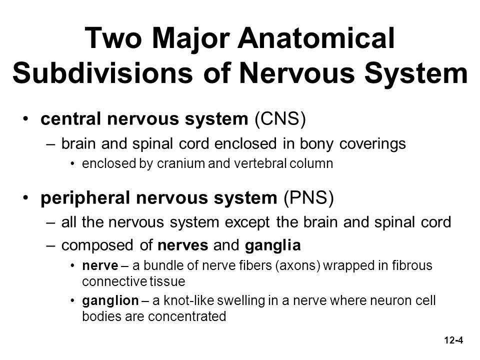 Two Major Anatomical Subdivisions of Nervous System
