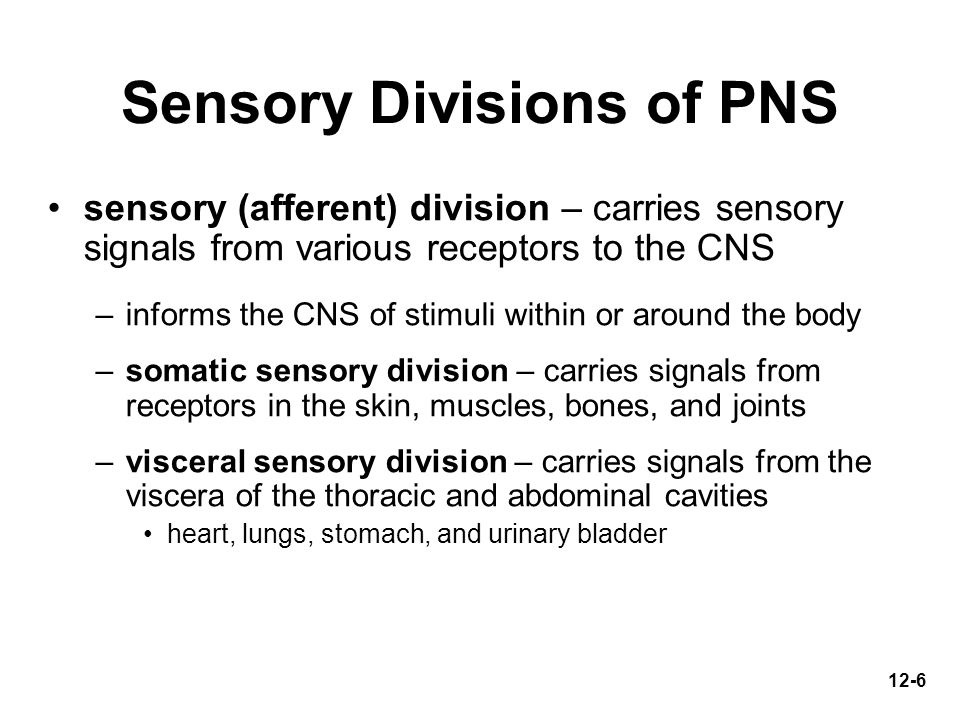 Sensory Divisions of PNS