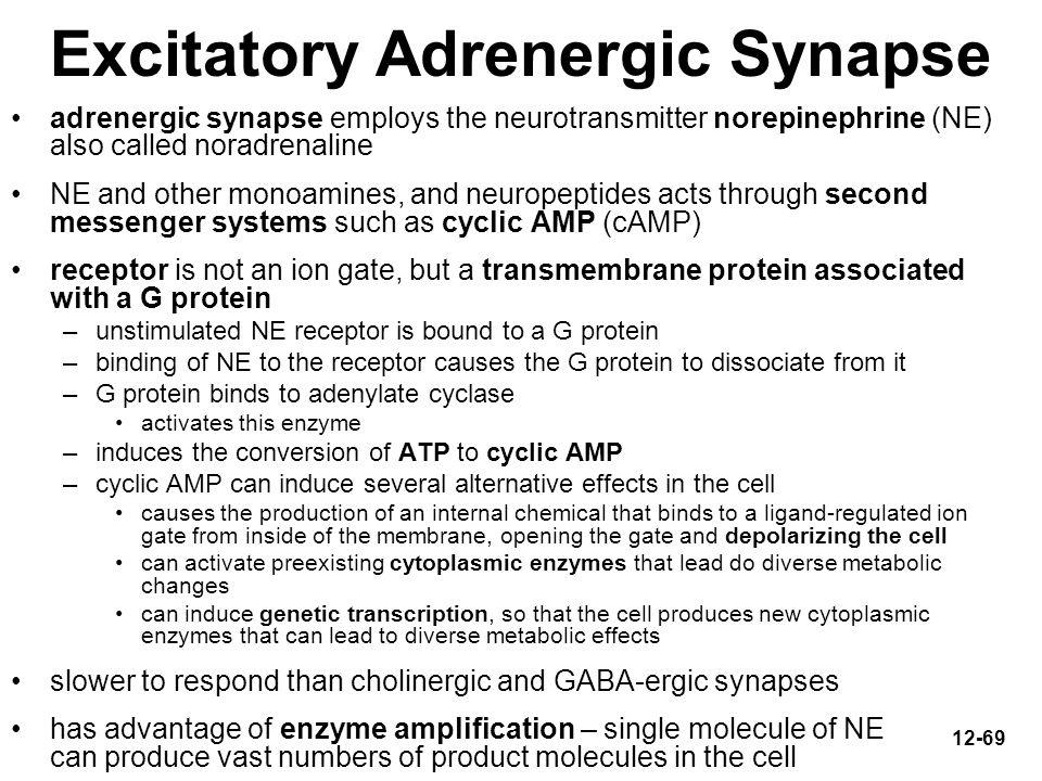 Excitatory Adrenergic Synapse