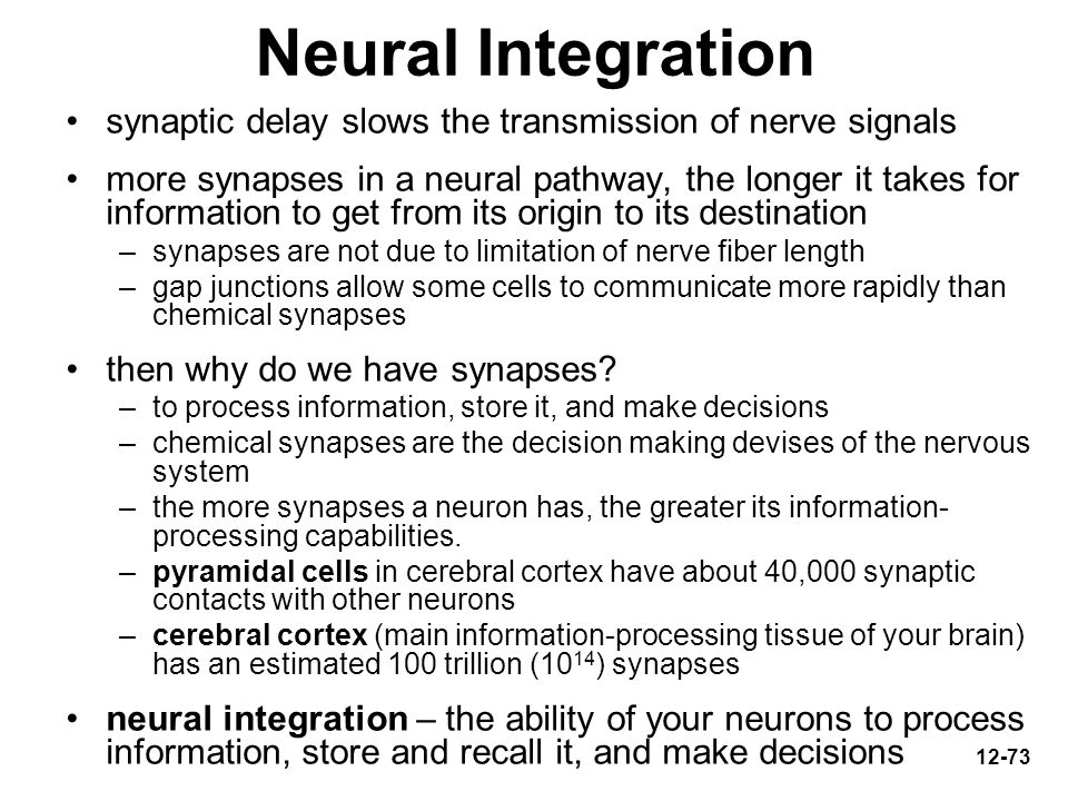 Neural Integration synaptic delay slows the transmission of nerve signals.