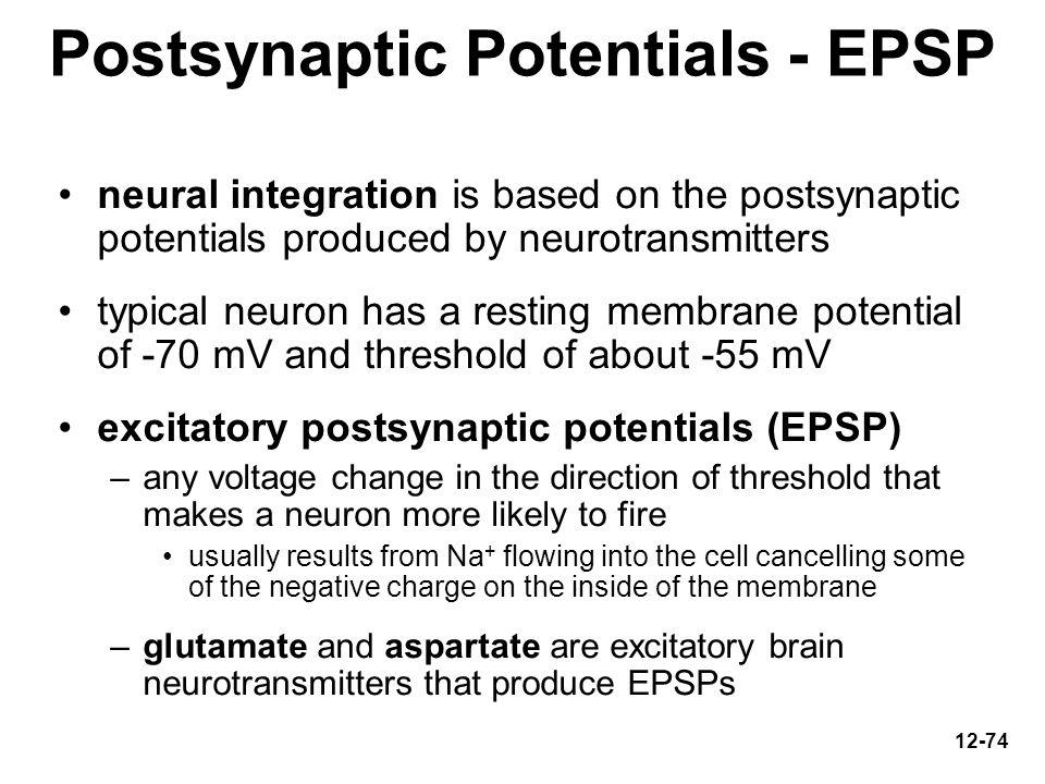 Postsynaptic Potentials - EPSP