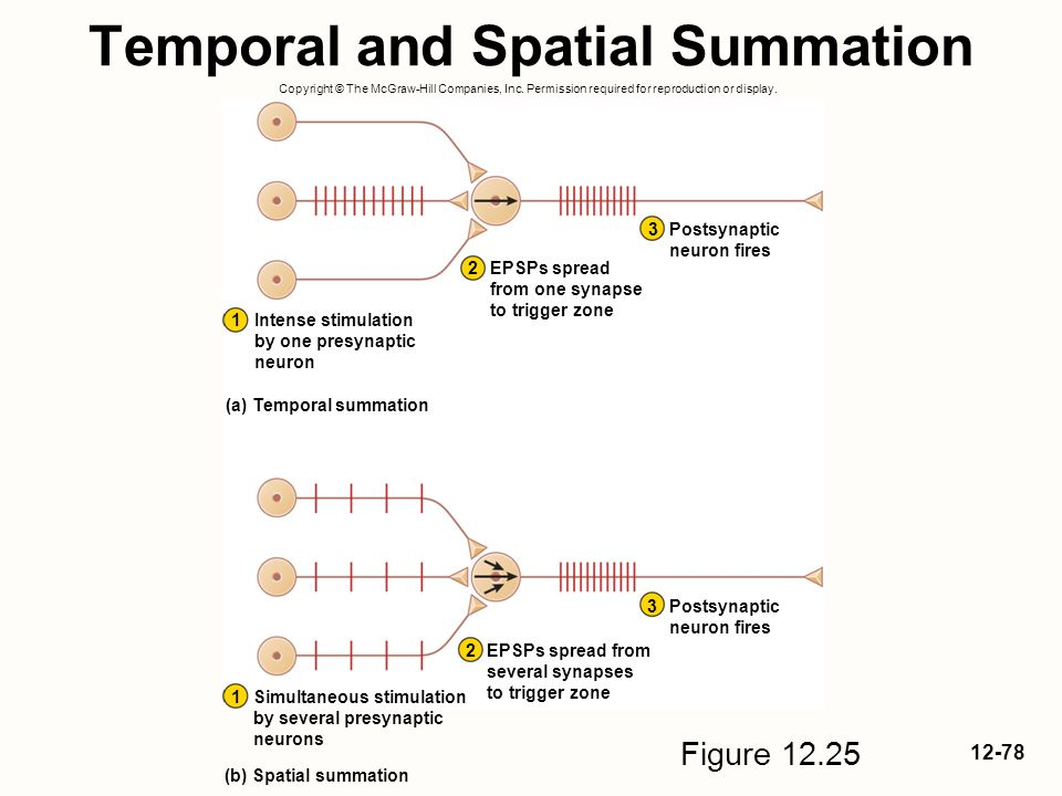 Temporal and Spatial Summation