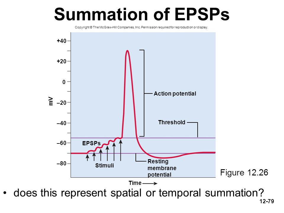 Summation of EPSPs does this represent spatial or temporal summation