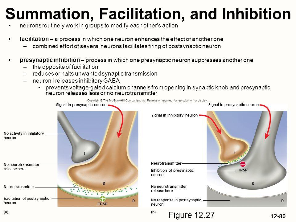 Summation, Facilitation, and Inhibition