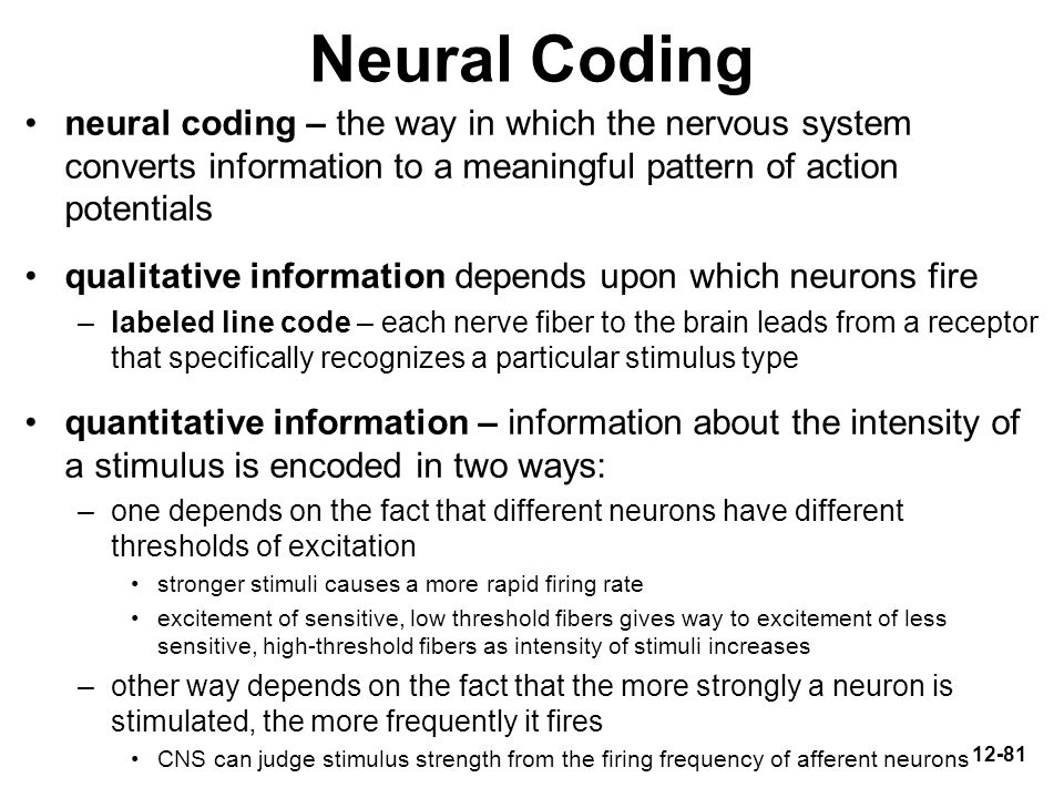 Neural Coding neural coding – the way in which the nervous system converts information to a meaningful pattern of action potentials.
