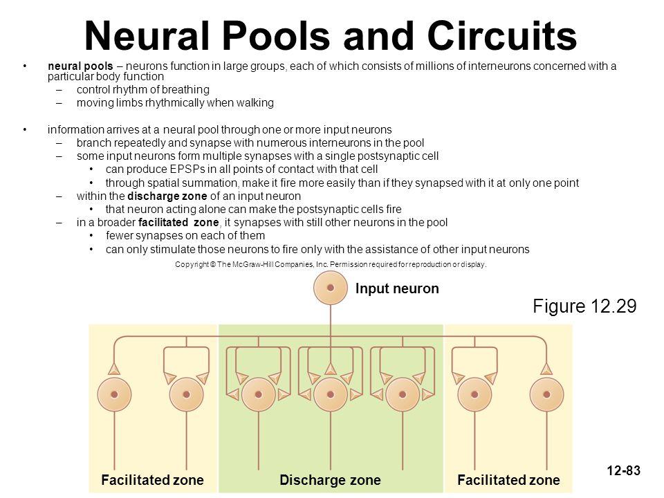 Neural Pools and Circuits