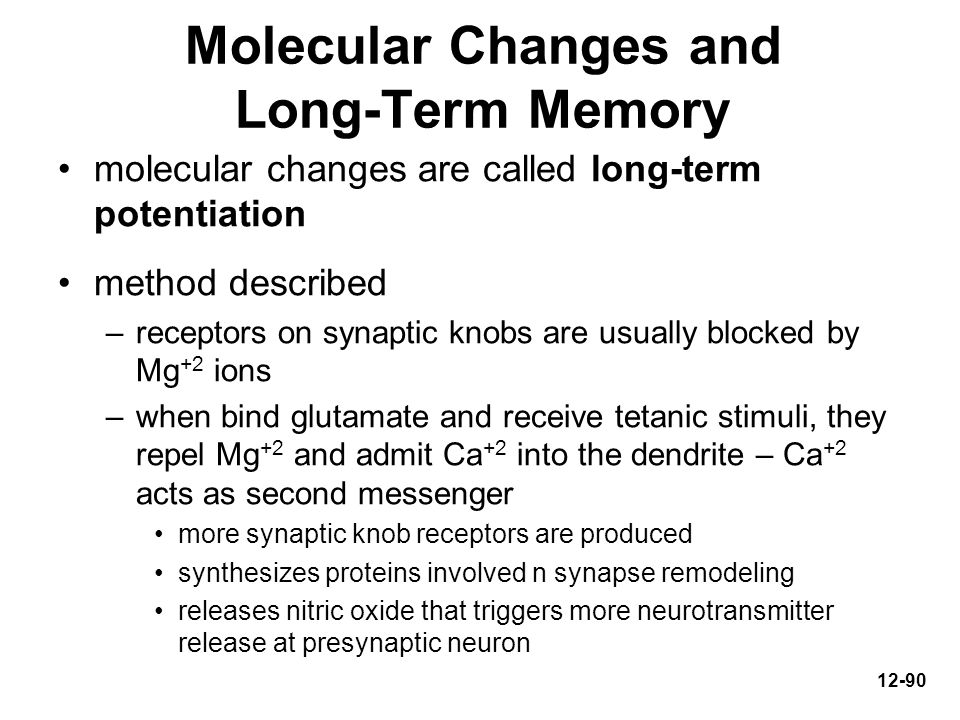 Molecular Changes and Long-Term Memory