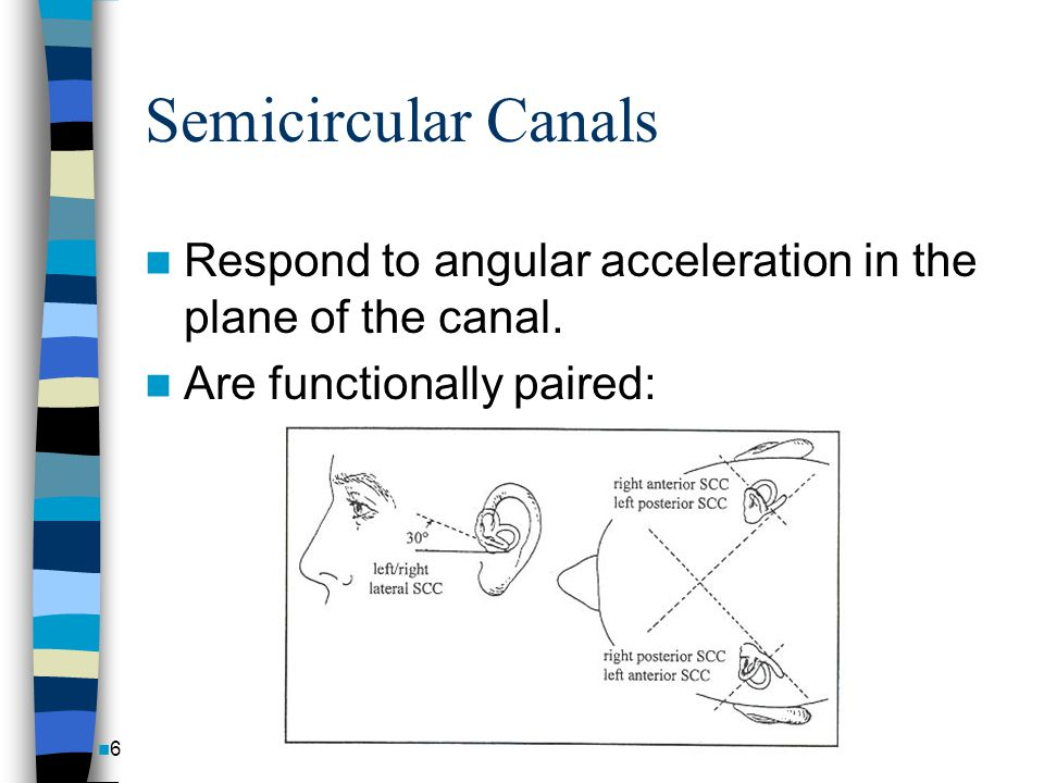 Semicircular Canals Respond to angular acceleration in the plane of the canal.