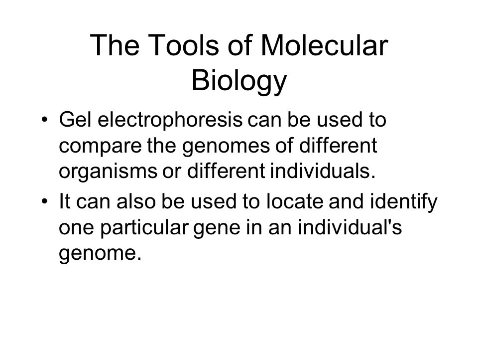The Tools of Molecular Biology