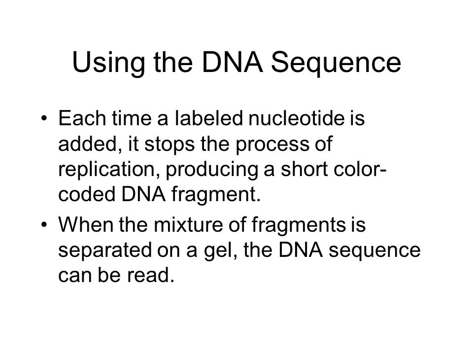 Using the DNA Sequence Each time a labeled nucleotide is added, it stops the process of replication, producing a short color-coded DNA fragment.