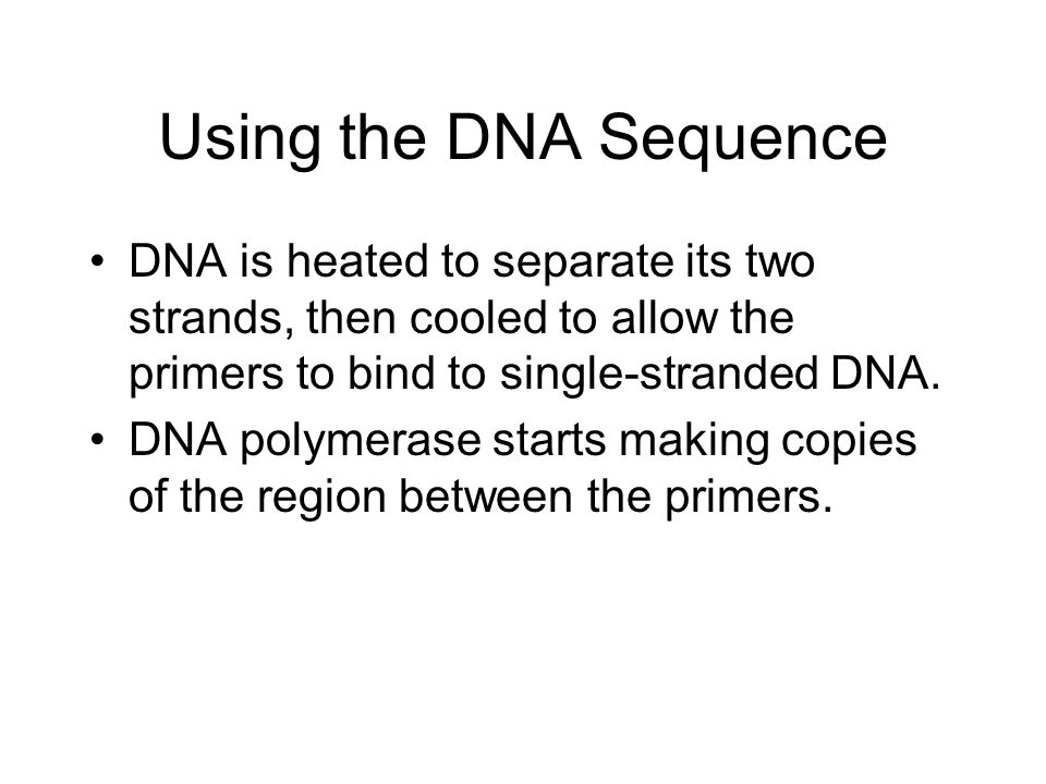 Using the DNA Sequence DNA is heated to separate its two strands, then cooled to allow the primers to bind to single-stranded DNA.