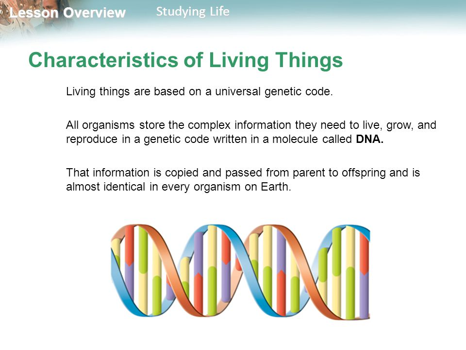 living organisms share a universal genetic Living organisms are based on a universal genetic code - all organisms store the complex information they need to live, grow, and reproduce in a genetic code written in a molecule called dna -that info is copied and passed from parent to offspring and is almost identical in every organism on earth.