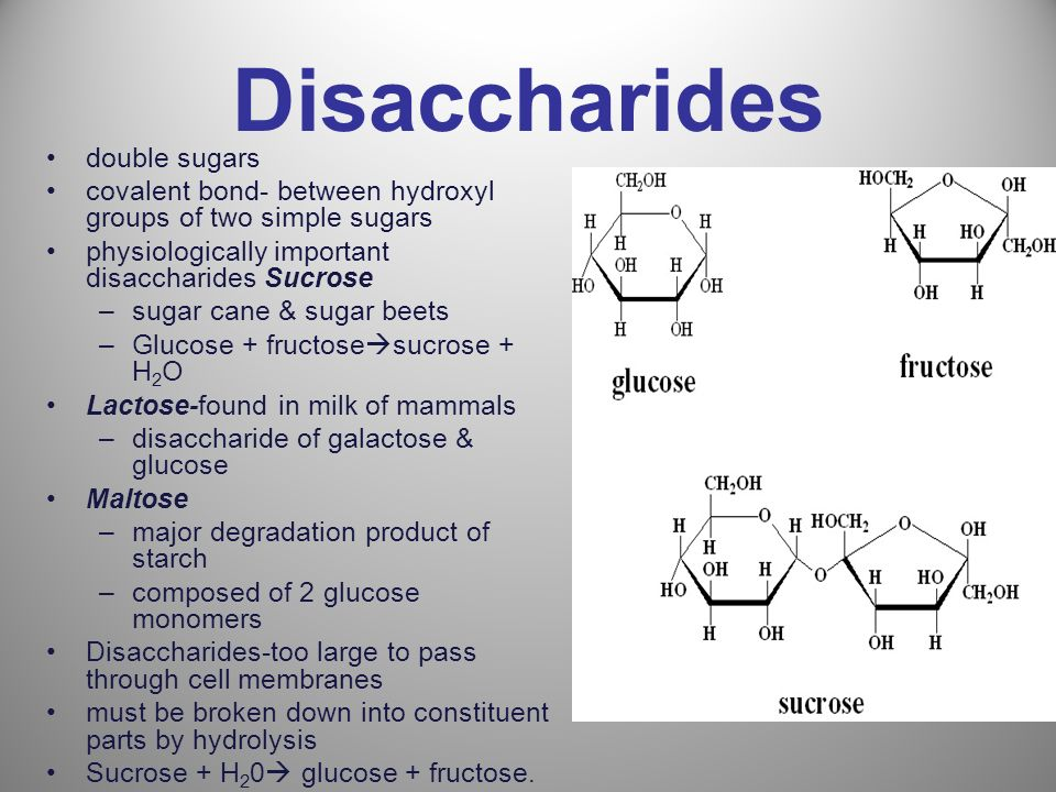 Disaccharides double sugars