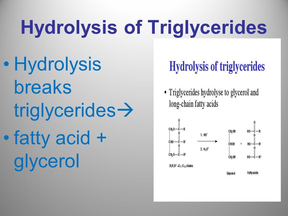 Hydrolysis of Triglycerides
