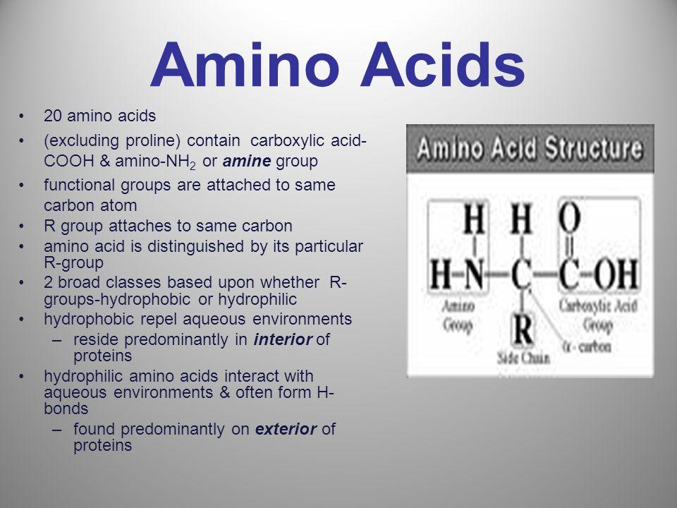 Amino Acids 20 amino acids