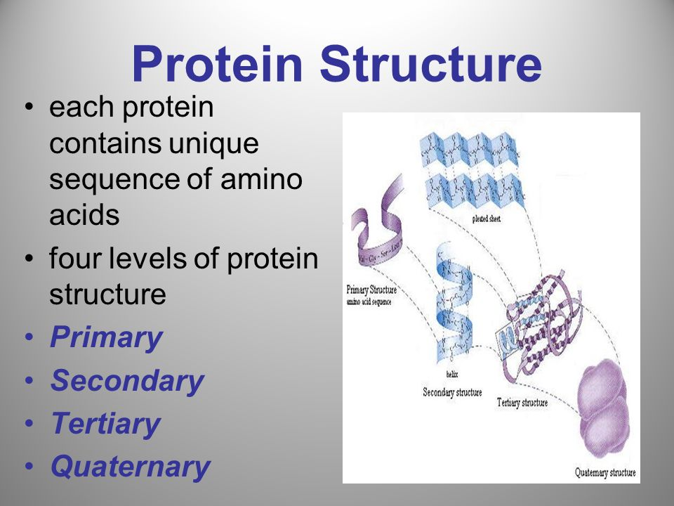Protein Structure each protein contains unique sequence of amino acids