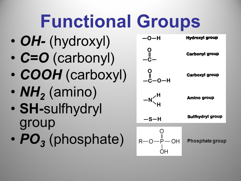Functional Groups OH- (hydroxyl) C=O (carbonyl) COOH (carboxyl)