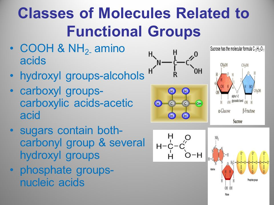 Classes of Molecules Related to Functional Groups