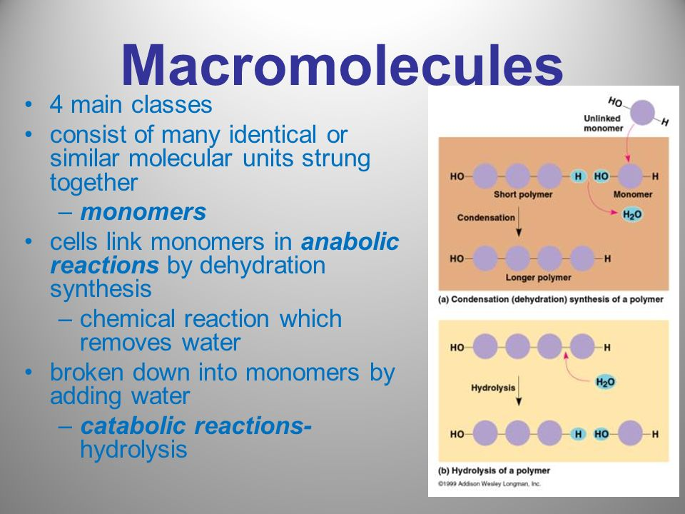 Macromolecules 4 main classes