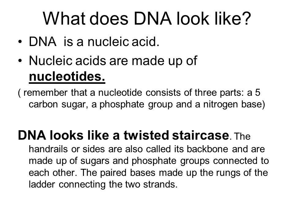 Triple-stranded DNA - Wikipedia