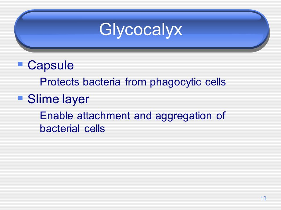Glycocalyx Capsule Slime layer Protects bacteria from phagocytic cells