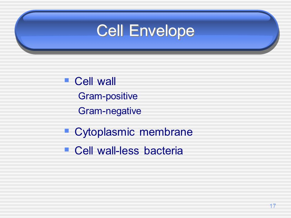Cell Envelope Cell wall Cytoplasmic membrane Cell wall-less bacteria