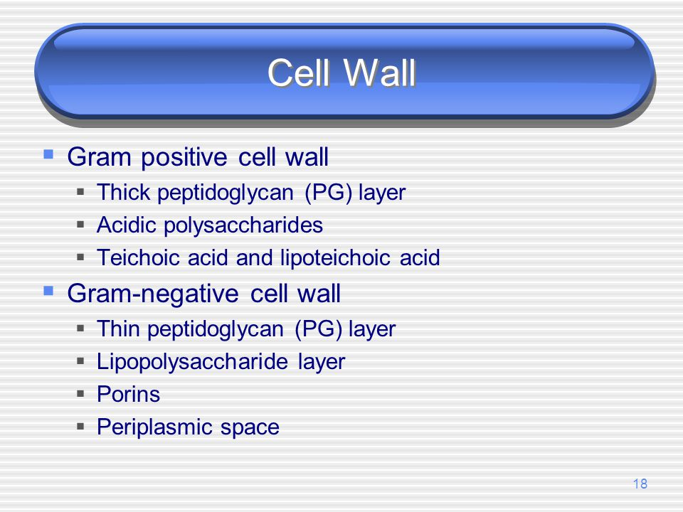Cell Wall Gram positive cell wall Gram-negative cell wall