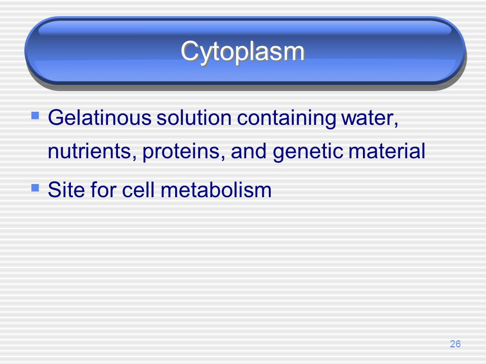 Cytoplasm Gelatinous solution containing water, nutrients, proteins, and genetic material.