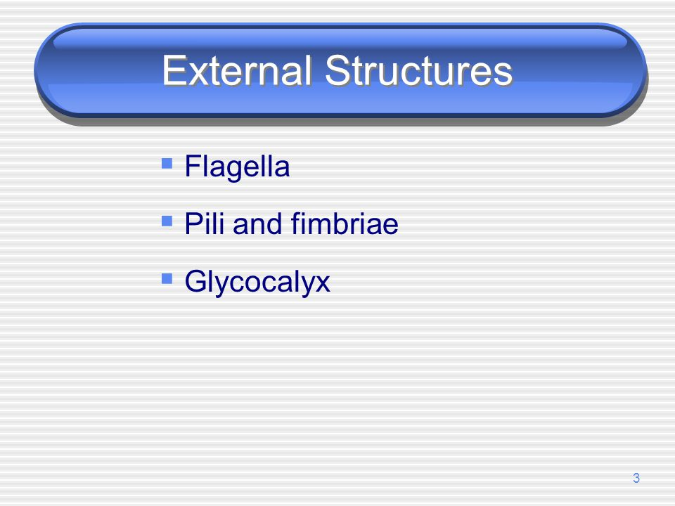 External Structures Flagella Pili and fimbriae Glycocalyx