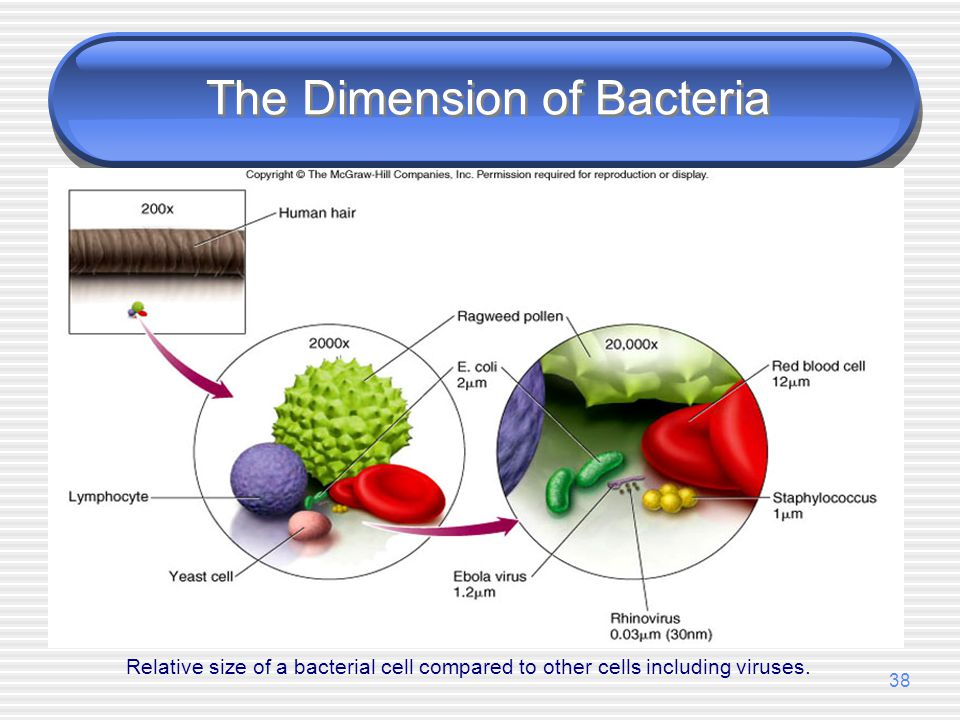 The Dimension of Bacteria