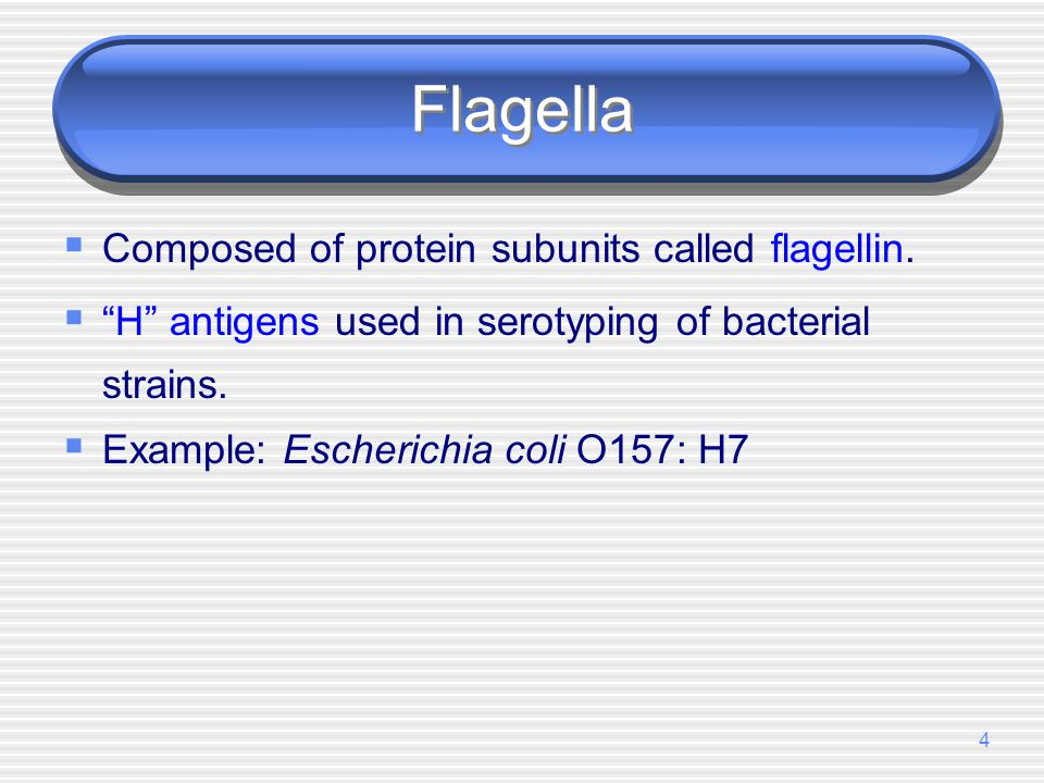 Flagella Composed of protein subunits called flagellin.