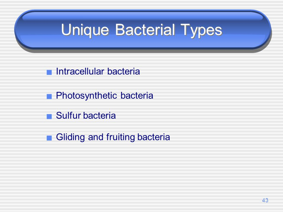 Unique Bacterial Types